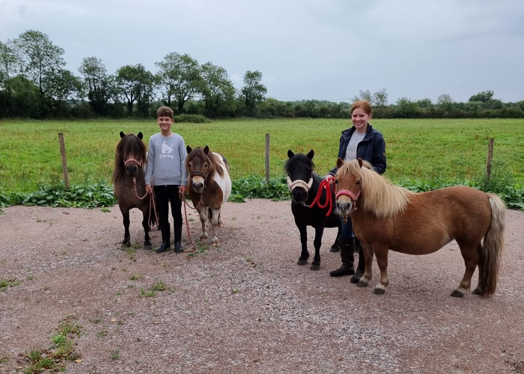 Mountsorrel Quarry helps stable ground for rescue ponies