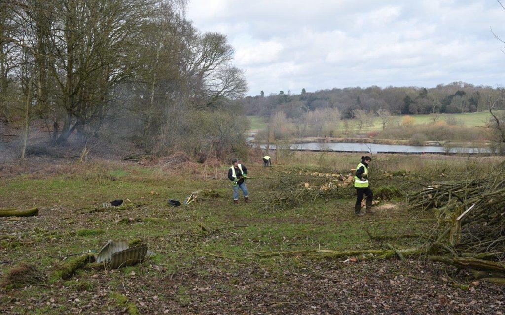 Woodland glade restored at Panshanger Park