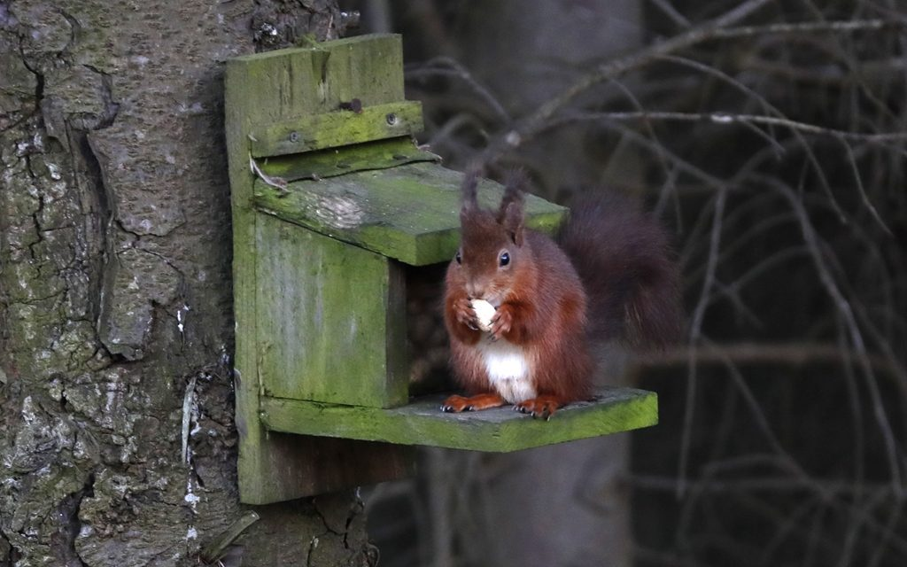 Tarmac goes nuts for Squirrel Appreciation Day