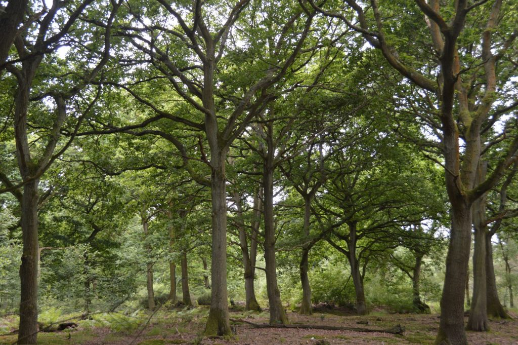 Tarmac receives approval from Natural England to expand National Nature Reserve