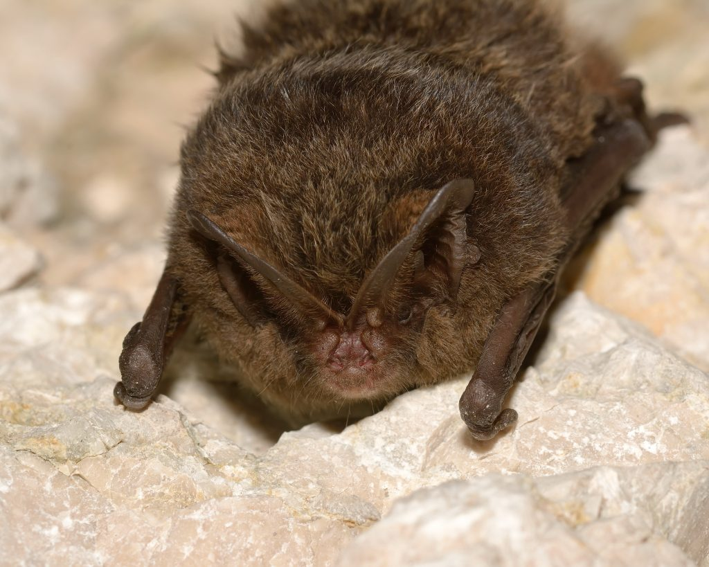 Tarmac highlights the importance of protecting bat species across its UK-wide sites